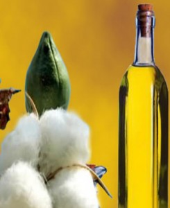 Cotton-Seed-Oil-Ready-For-Export